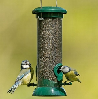 Bird standard peanut feeder Bird Feeding
