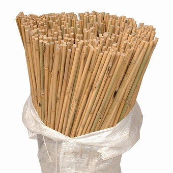 Bamboo Canes 10'   55/60 lbs  125/bale Canes > Bamboo