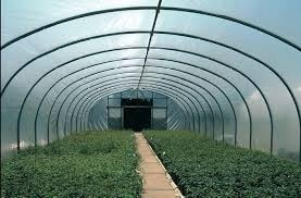 11.2m Wide White Tunnel Cover Tunnel Covers > Five Season